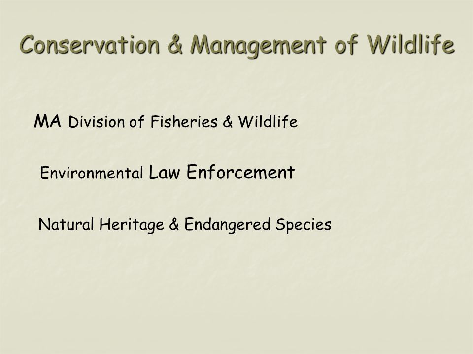 Conservation & Management of Wildlife MA Division of Fisheries & Wildlife Environmental Law Enforcement Natural Heritage & Endangered Species