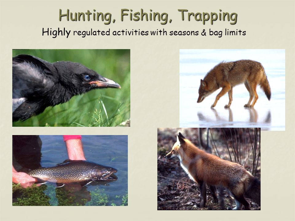 Hunting, Fishing, Trapping Highly regulated activities with seasons & bag limits