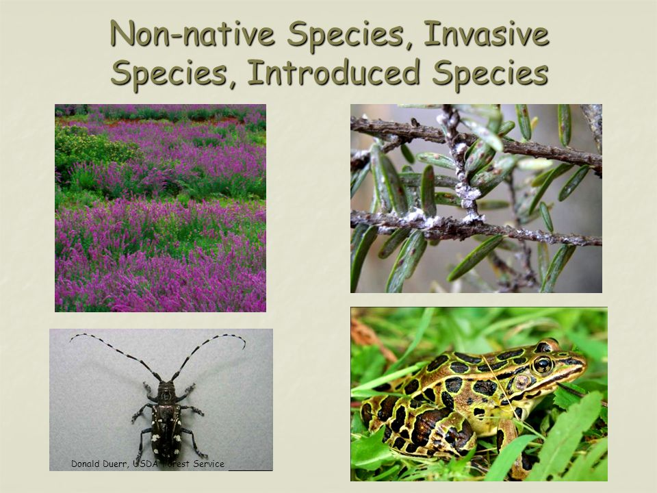 Non-native Species, Invasive Species, Introduced Species Donald Duerr, USDA Forest Service
