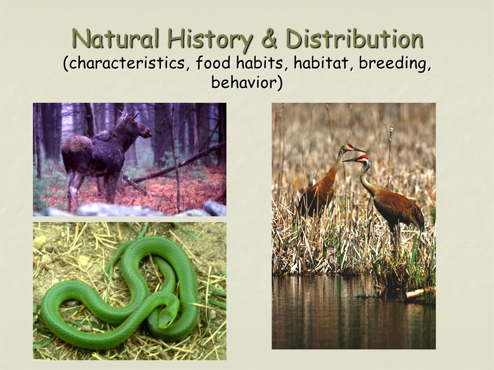 Natural History & Distribution (characteristics, food habits, habitat, breeding, behavior)