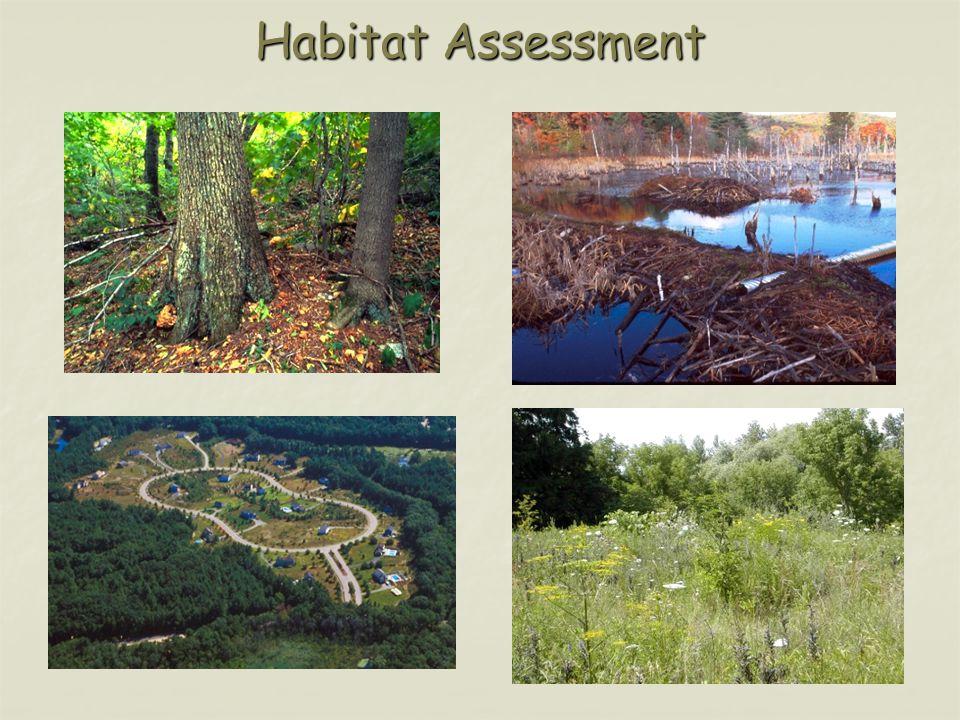 Habitat Assessment