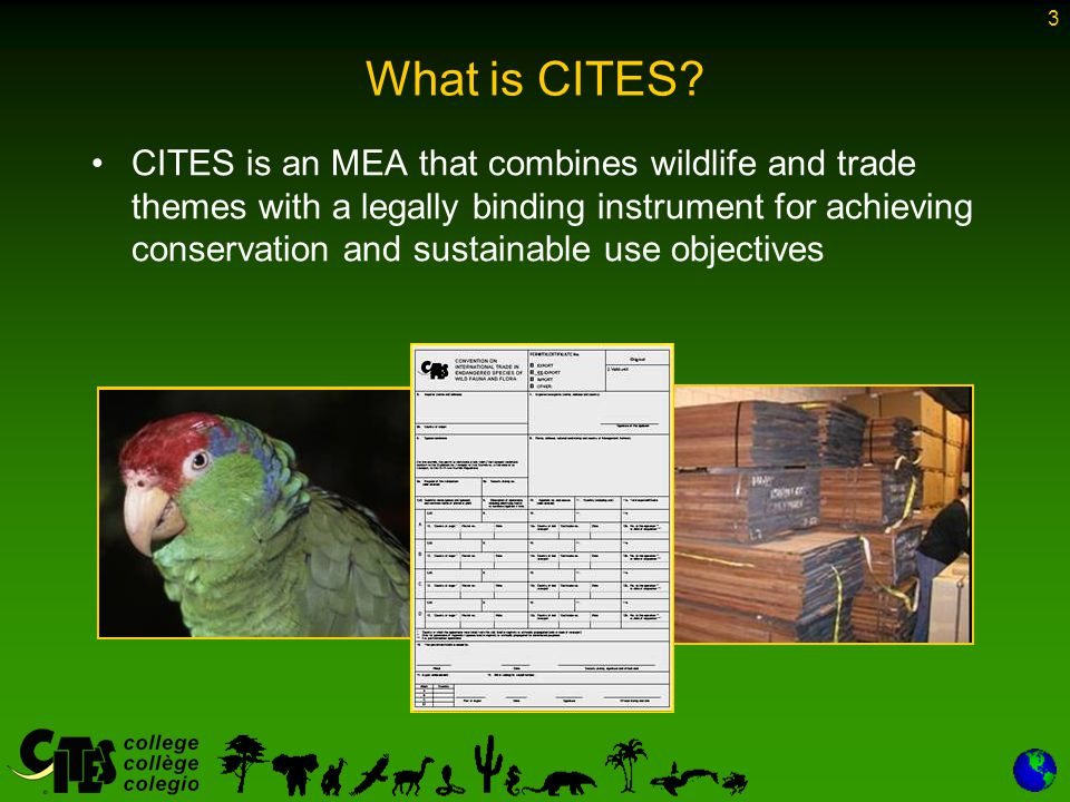 3 CITES is an MEA that combines wildlife and trade themes with a legally binding instrument for achieving conservation and sustainable use objectives