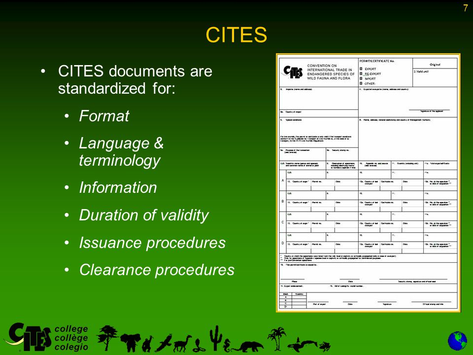 7 CITES CITES documents are standardized for: Format Language & terminology Information Duration of validity Issuance procedures Clearance procedures
