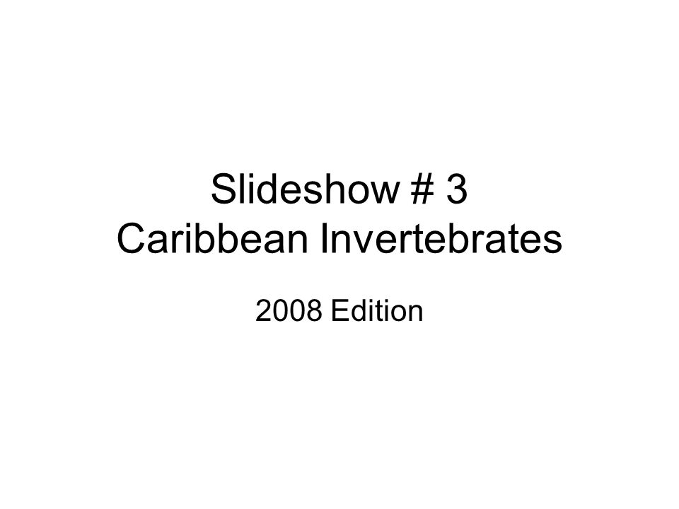 Slideshow # 3 Caribbean Invertebrates 2008 Edition