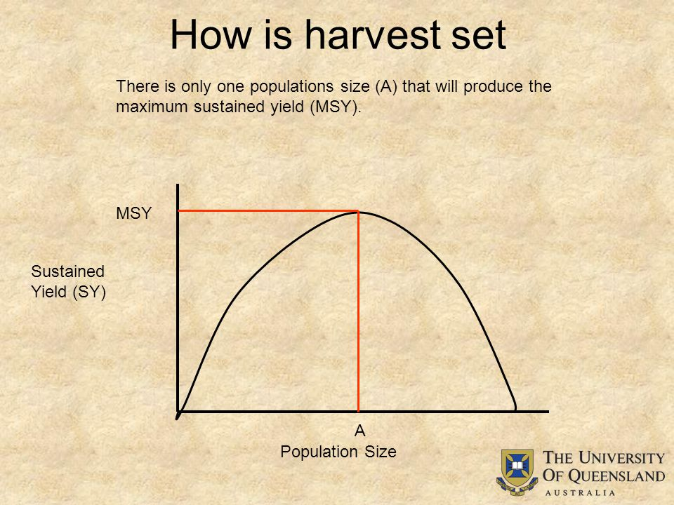 How is harvest set Population Size Sustained Yield (SY) MSY There is only one populations size (A) that will produce the maximum sustained yield (MSY).
