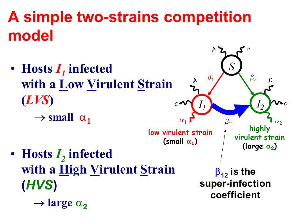 A simple two-strains competition model Hosts I 1 infected with a Low Virulent Strain (LVS)  small  1 Hosts I 2 infected with a High Virulent Strain (HVS)  large  2  S I2I2    I1I1     low virulent strain (small  1 ) highly virulent strain (large  2 )  c c c  12 is the super-infection coefficient