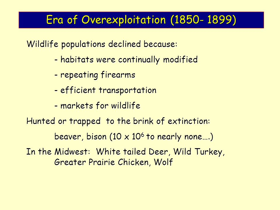 Era of Overexploitation (1850- 1899) Wildlife populations declined because: - habitats were continually modified - repeating firearms - efficient tran