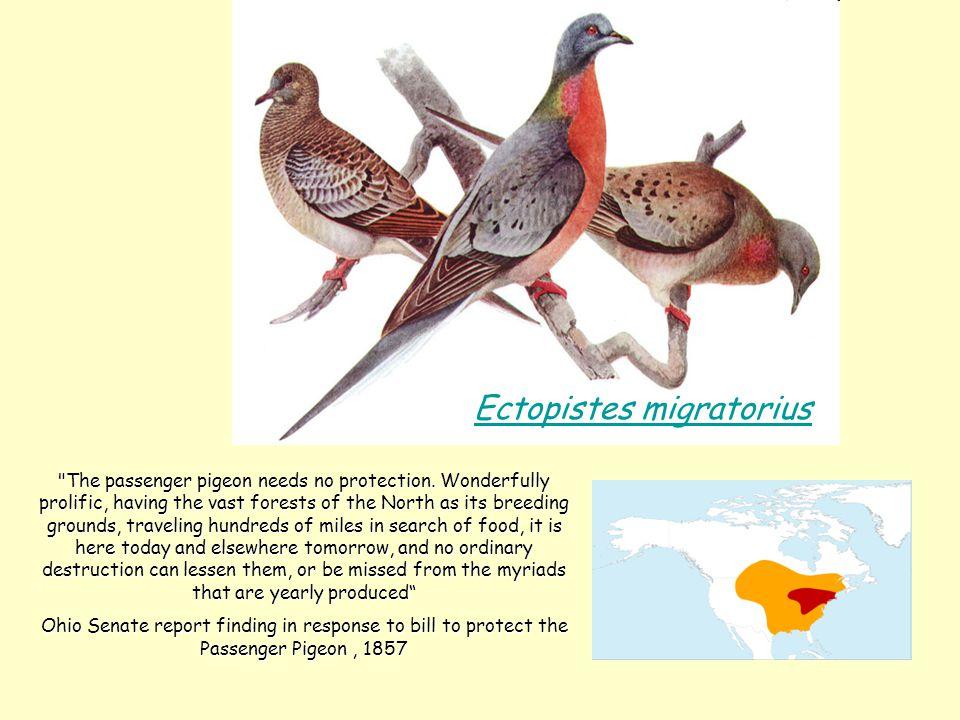 Ectopistes migratorius The passenger pigeon needs no protection.
