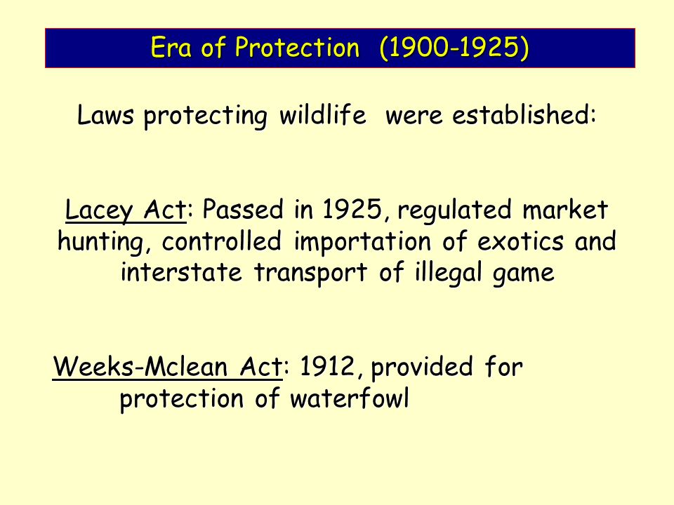 Laws protecting wildlife were established: Lacey Act: Passed in 1925, regulated market hunting, controlled importation of exotics and interstate transport of illegal game Weeks-Mclean Act: 1912, provided for protection of waterfowl