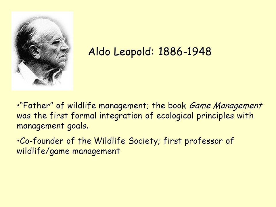 Aldo Leopold: 1886-1948 Father of wildlife management; the book Game Management was the first formal integration of ecological principles with management goals. Father of wildlife management; the book Game Management was the first formal integration of ecological principles with management goals.