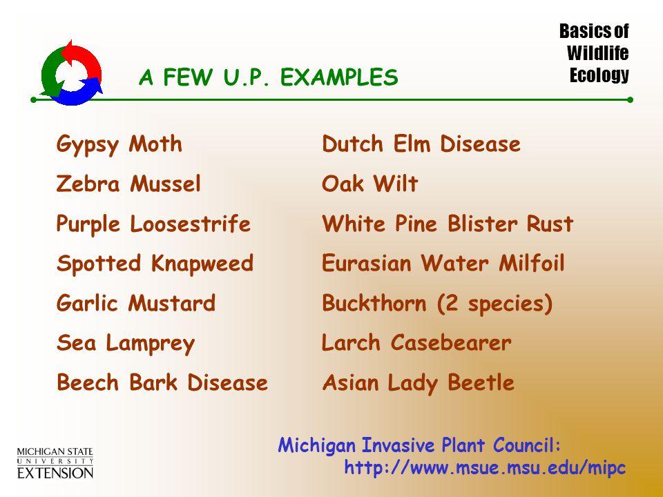 Basics of Wildlife Ecology A FEW U.P.