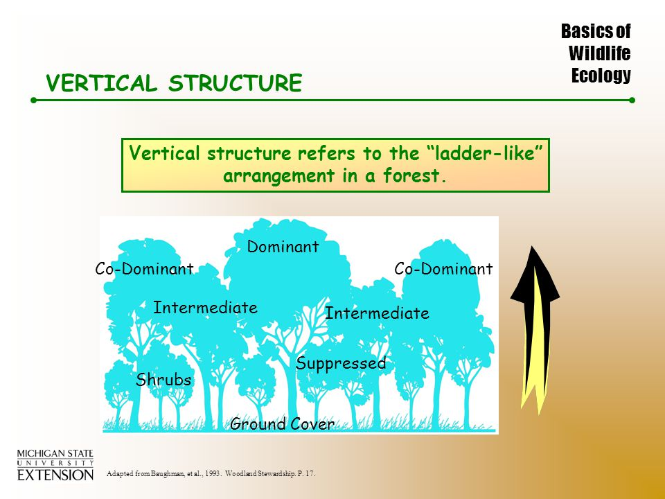 Basics of Wildlife Ecology VERTICAL STRUCTURE Vertical structure refers to the ladder-like arrangement in a forest.