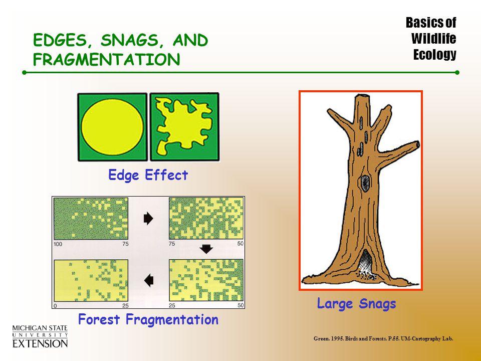 Basics of Wildlife Ecology EDGES, SNAGS, AND FRAGMENTATION Edge Effect Forest Fragmentation Green.