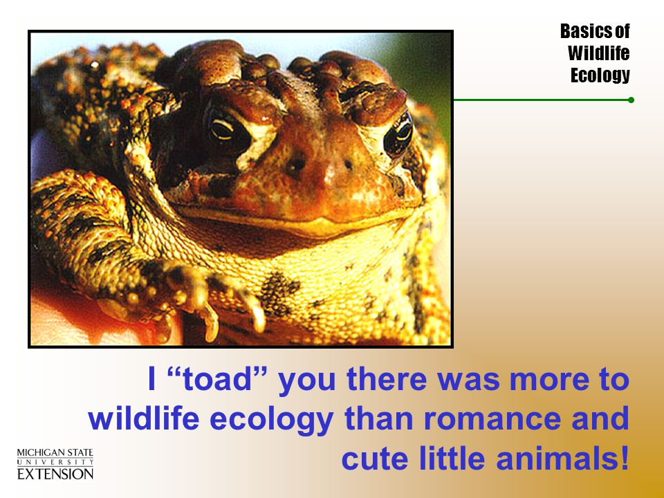 Basics of Wildlife Ecology I toad you there was more to wildlife ecology than romance and cute little animals!