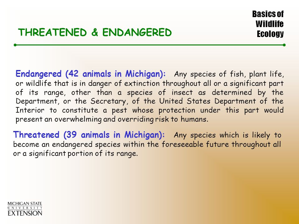 Basics of Wildlife Ecology THREATENED & ENDANGERED Endangered (42 animals in Michigan): Any species of fish, plant life, or wildlife that is in danger of extinction throughout all or a significant part of its range, other than a species of insect as determined by the Department, or the Secretary, of the United States Department of the Interior to constitute a pest whose protection under this part would present an overwhelming and overriding risk to humans.