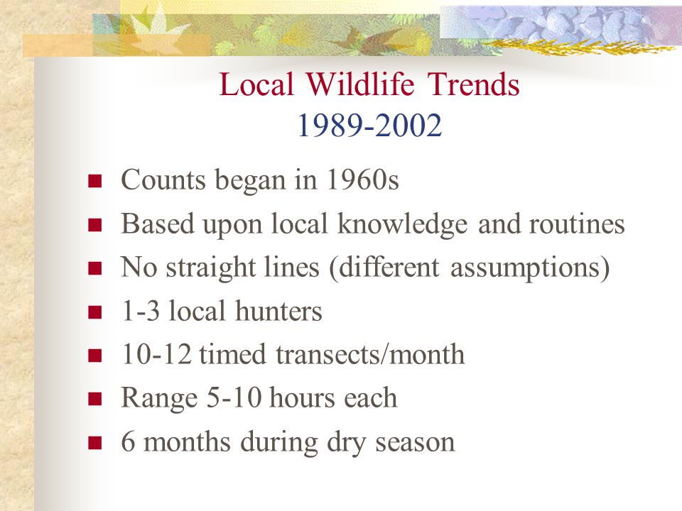Local Wildlife Trends 1989-2002 Counts began in 1960s Based upon local knowledge and routines No straight lines (different assumptions) 1-3 local hunters 10-12 timed transects/month Range 5-10 hours each 6 months during dry season