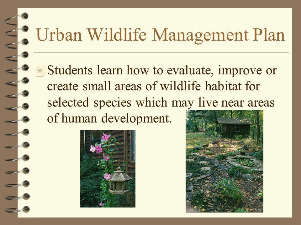 Urban Wildlife Management Plan 4 Students learn how to evaluate, improve or create small areas of wildlife habitat for selected species which may live near areas of human development.