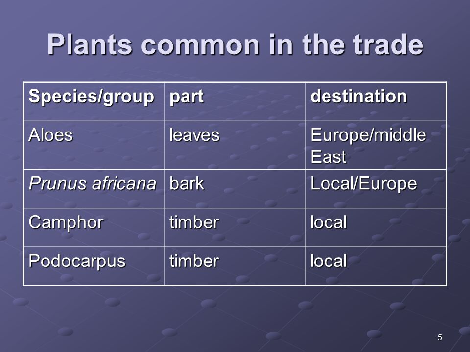 5 Plants common in the trade Species/grouppartdestination Aloesleaves Europe/middle East Prunus africana barkLocal/Europe Camphortimberlocal Podocarpustimberlocal
