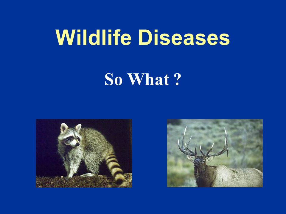 Conservationists Who Cares?