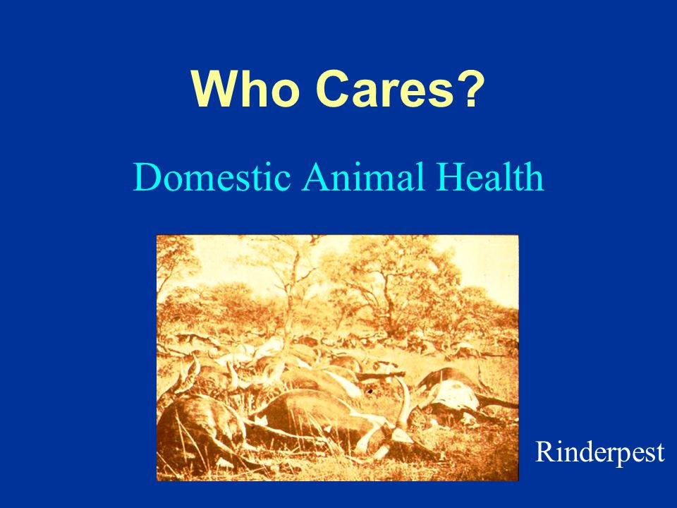 Domestic Animal Health Who Cares Rinderpest