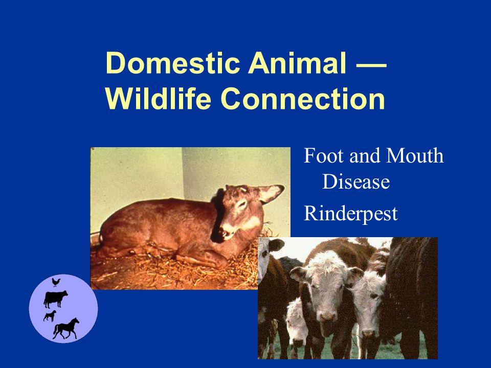 Wildlife Conservation Responsible Stewardship Diseases