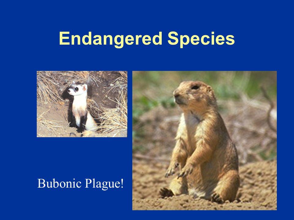 Wildlife Diseases Who Cares ?