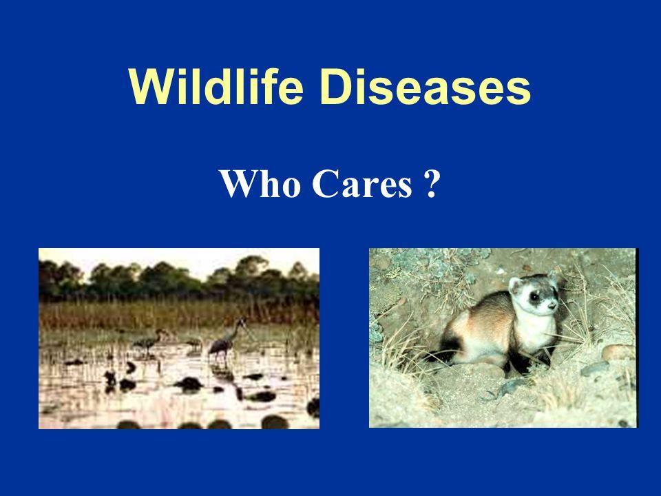 Public Health Who Cares? Lyme disease