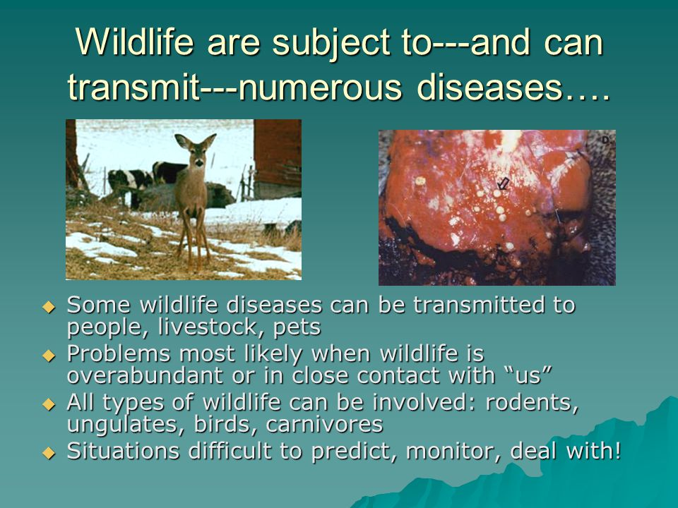How do we protect ourselves and reduce the risk of contracting a wildlife disease?.