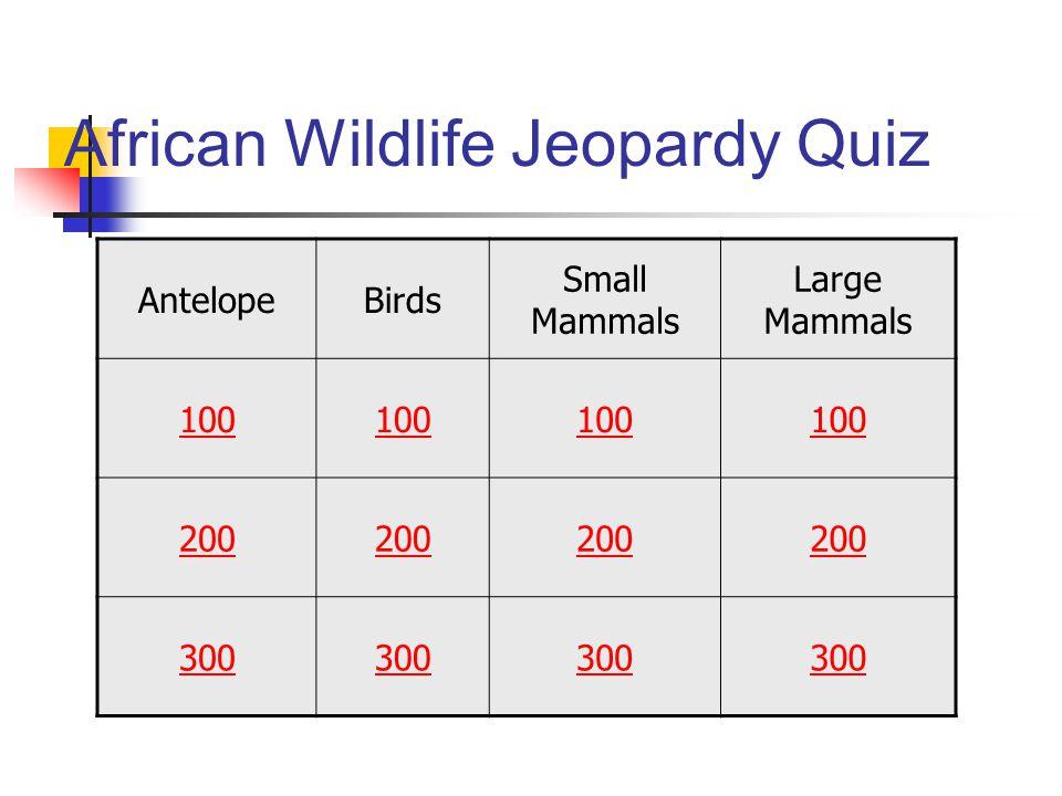 African Wildlife Jeopardy Quiz AntelopeBirds Small Mammals Large Mammals 100 200 300