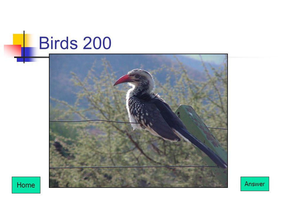 Birds 200 Home Answer