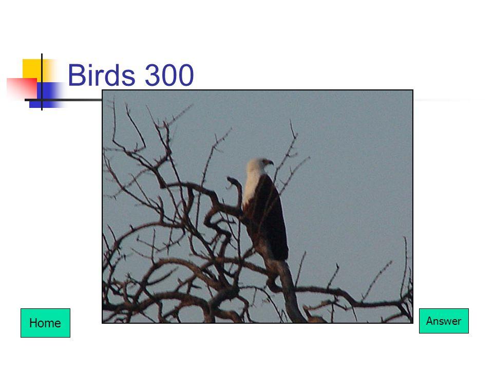 Birds 300 Home Answer