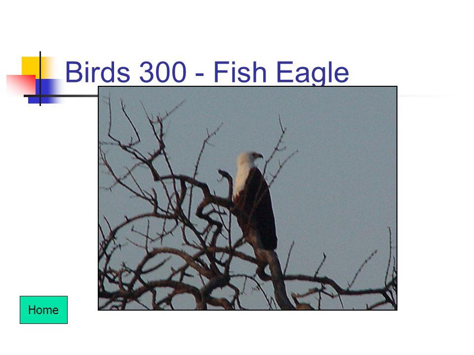 Birds 300 - Fish Eagle Home