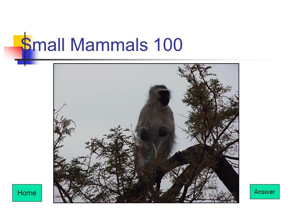 Small Mammals 100 Home Answer