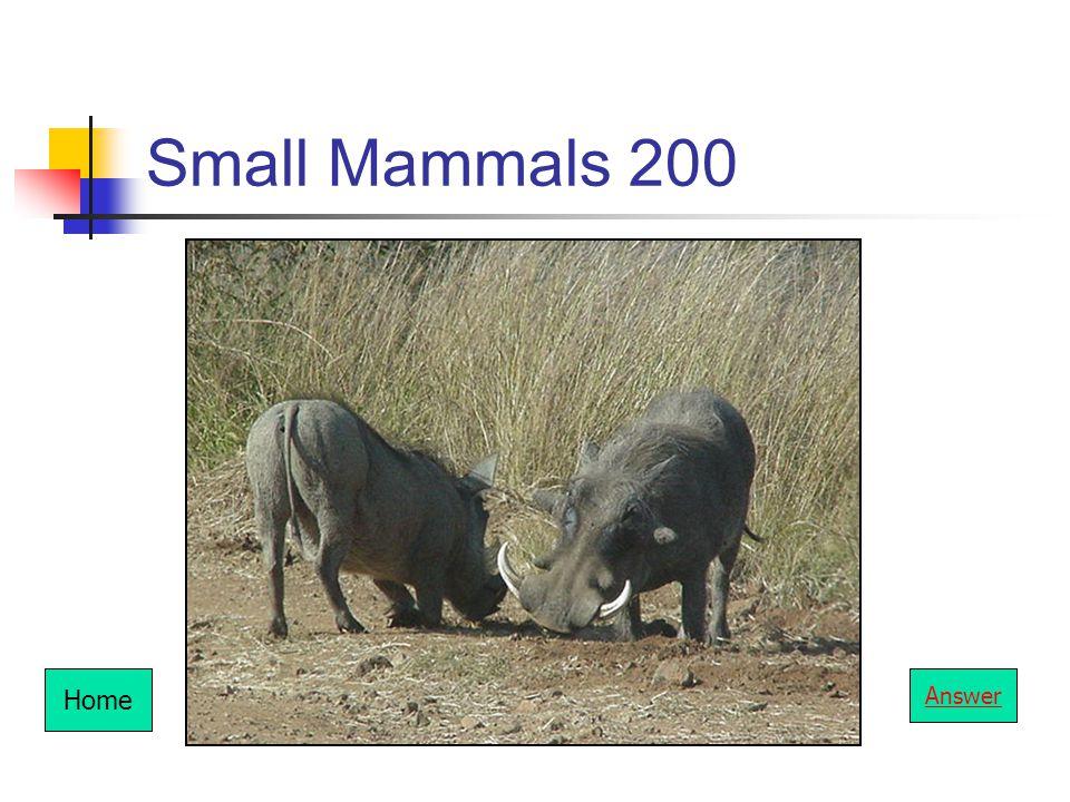 Small Mammals 200 Home Answer