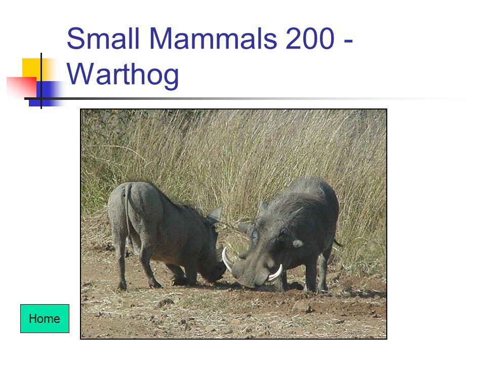 Small Mammals 200 - Warthog Home