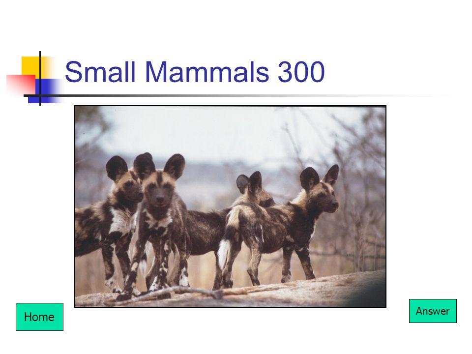 Small Mammals 300 Home Answer
