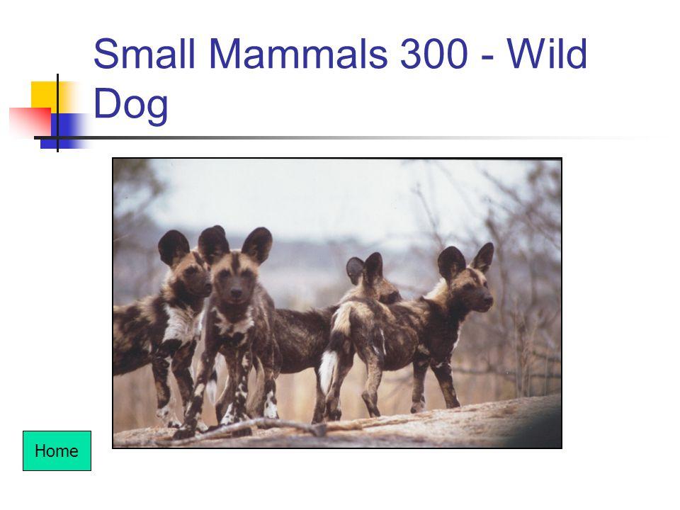 Small Mammals 300 - Wild Dog Home