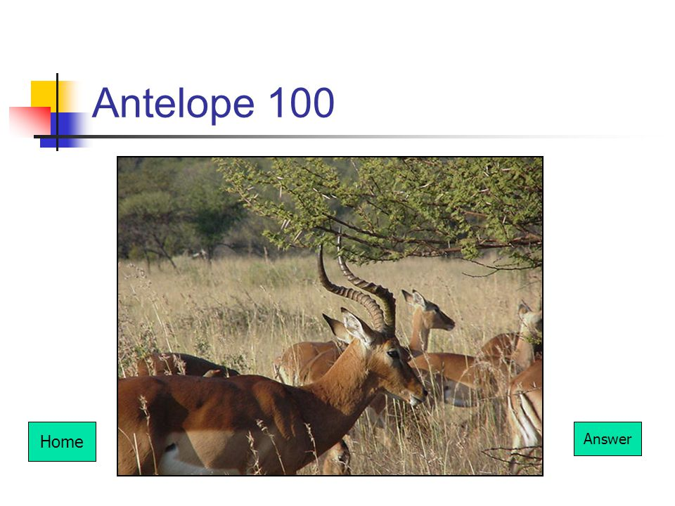 Antelope 100 Home Answer