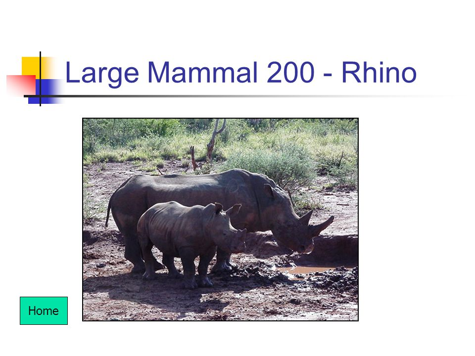 Large Mammal 200 - Rhino Home