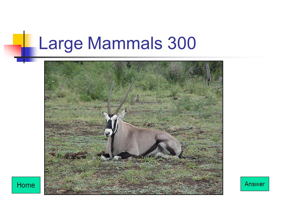 Large Mammals 300 Home Answer