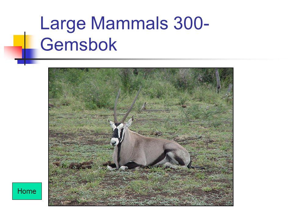 Large Mammals 300- Gemsbok Home