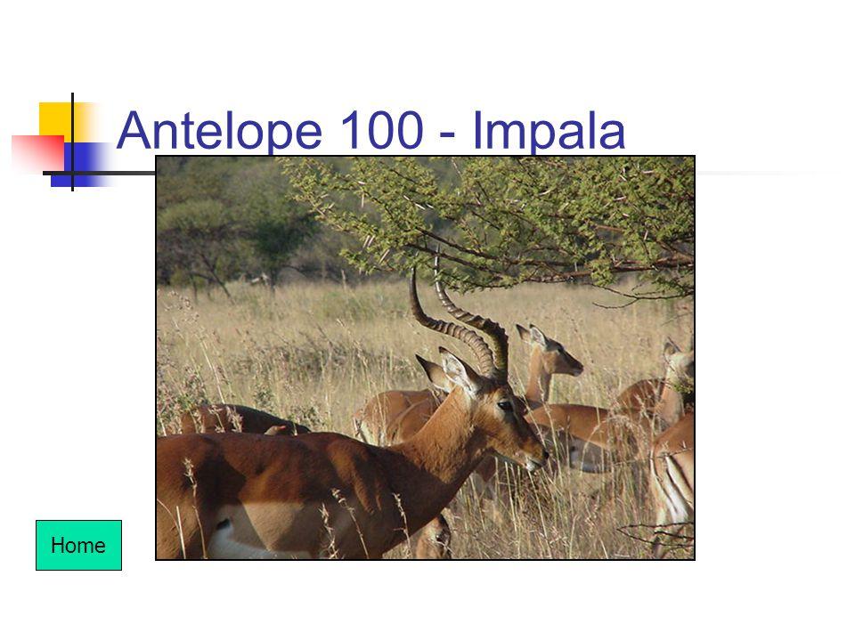 Antelope 100 - Impala Home