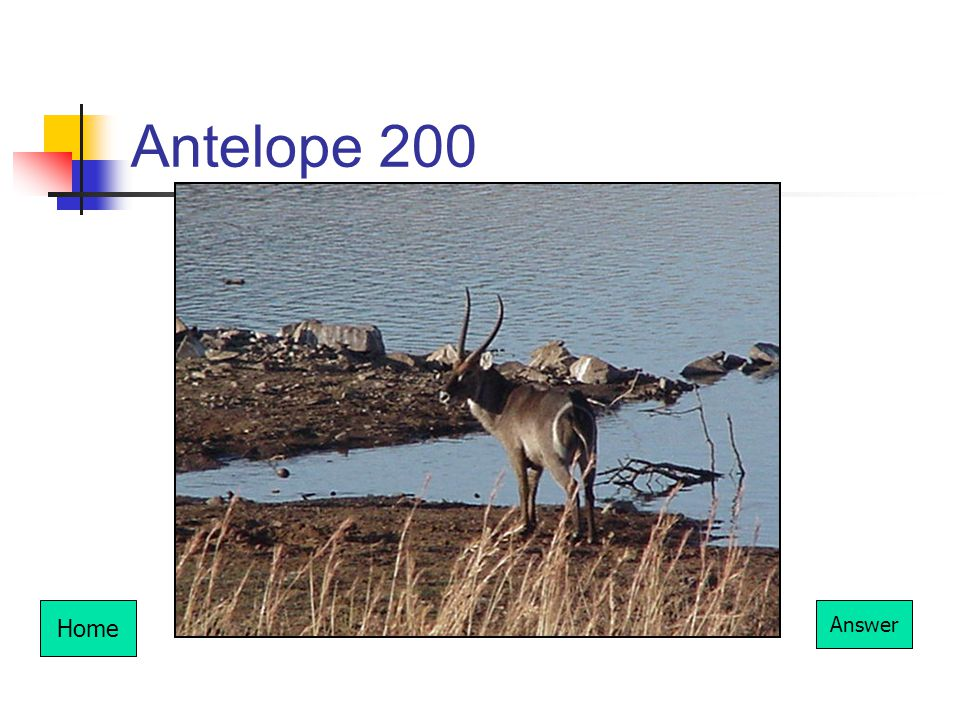 Antelope 200 Home Answer