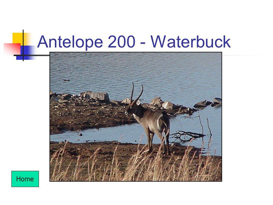 Antelope 200 - Waterbuck Home