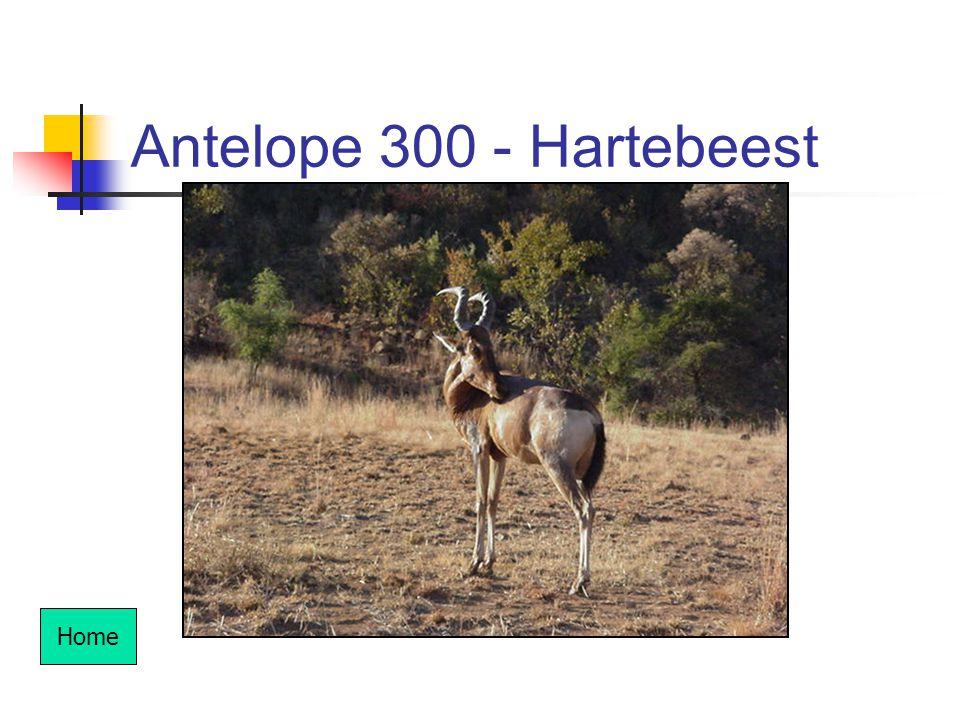 Antelope 300 - Hartebeest Home