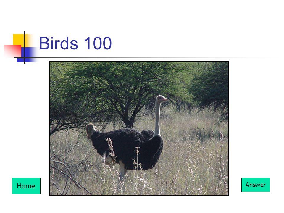 Birds 100 Home Answer