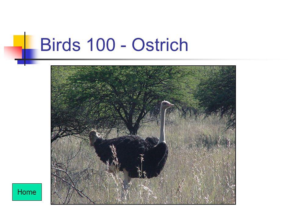 Birds 100 - Ostrich Home