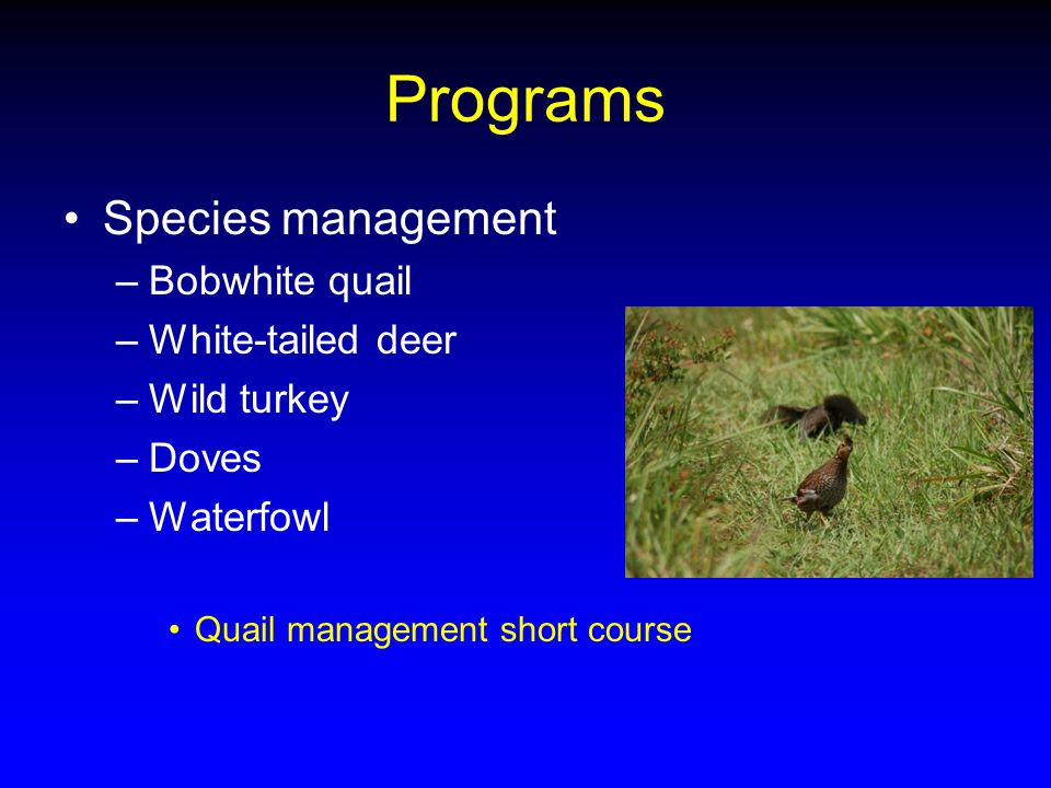 Programs Species management –Bobwhite quail –White-tailed deer –Wild turkey –Doves –Waterfowl Quail management short course