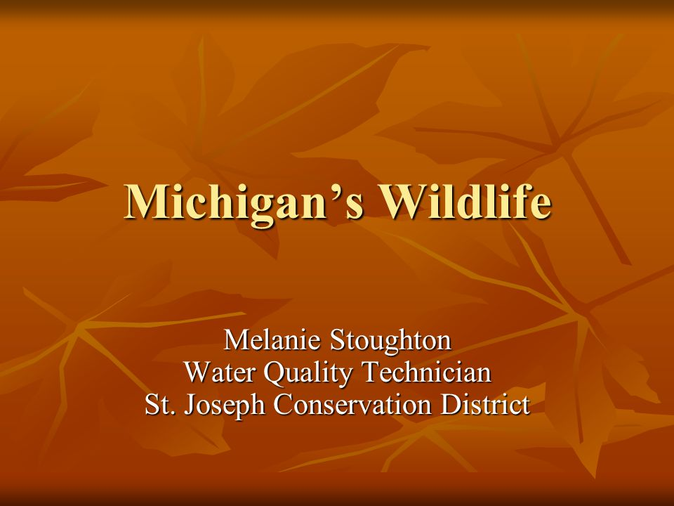 Michigan's Wildlife Melanie Stoughton Water Quality Technician St. Joseph Conservation District