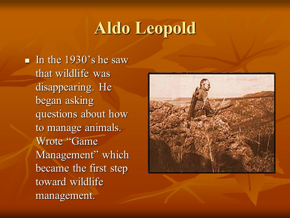 "Aldo Leopold In the 1930's he saw that wildlife was disappearing. He began asking questions about how to manage animals. Wrote ""Game Management"" which"